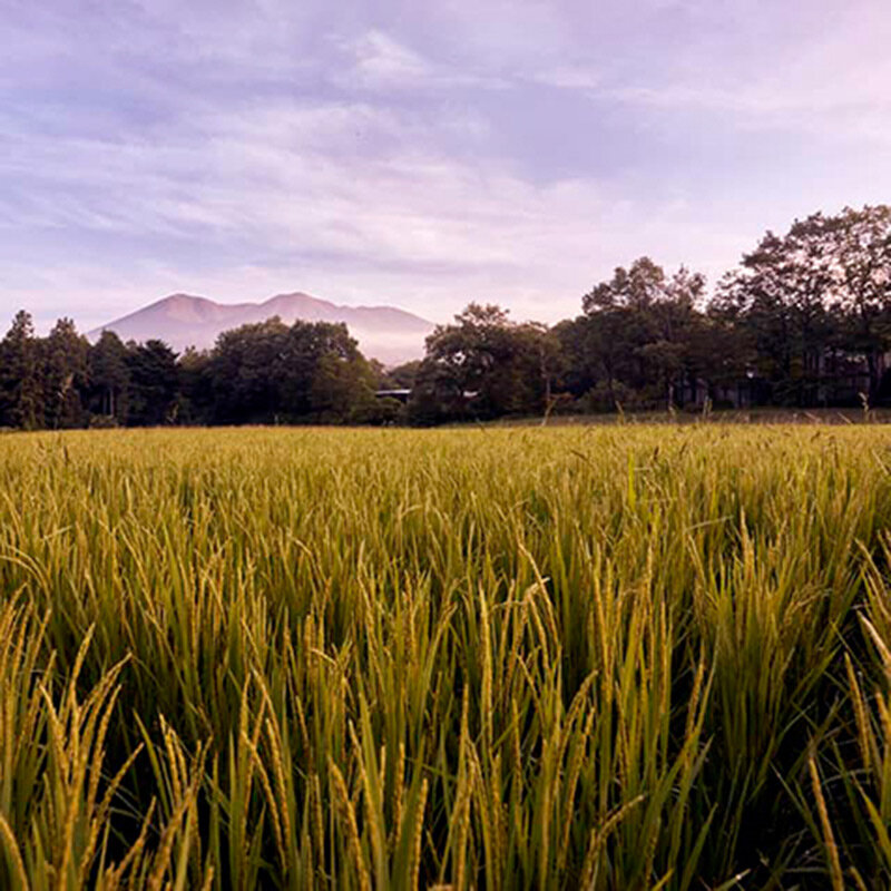 星野リゾート リゾナーレ那須が、お米づくりの魅力を伝える「お米の学校」を開校|TRAVEL