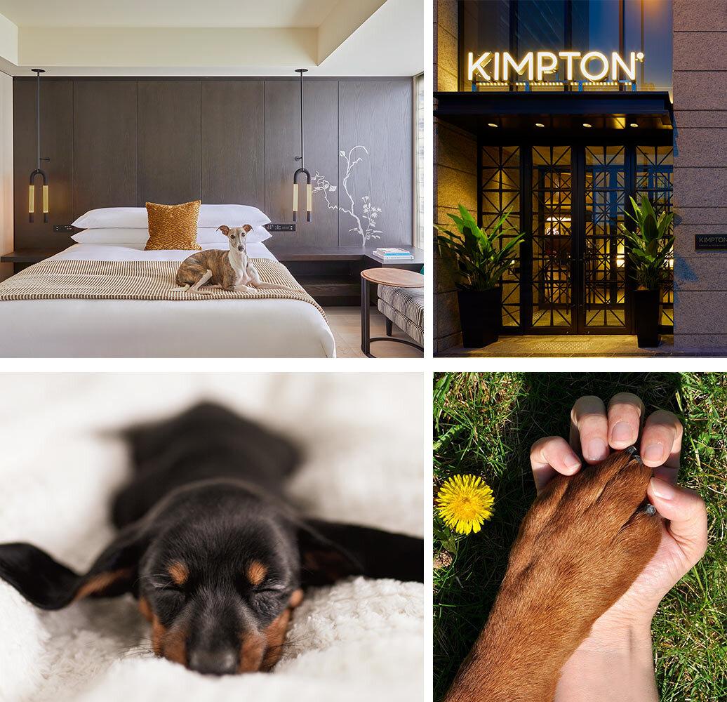 いつも癒しをくれる愛犬にペットケーションをプレゼント! 一緒にブランチも楽しむ宿泊プラン|Kimpton Shinjuku Tokyo