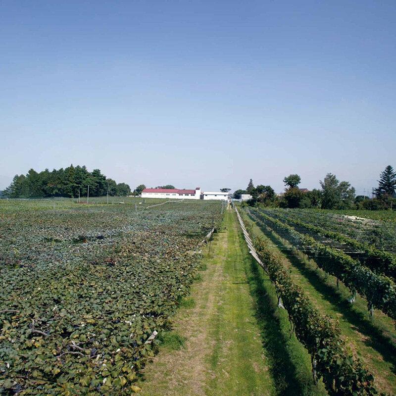 老舗ワイナリーでブドウを収穫し、自分好みのワインを完成させる「手業のひととき」|TRAVEL