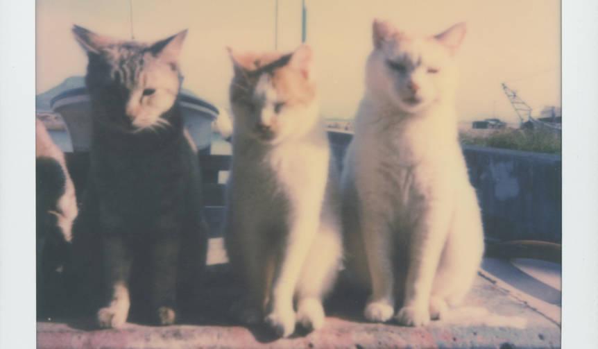 路地裏で出会った猫を撮影した写真展が開催|LOUNGE