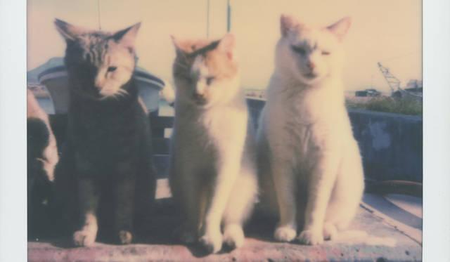 路地裏で出会った猫を撮影した写真展が開催 LOUNGE