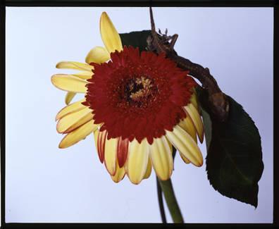 第7回:荒木経惟という写真家の本当のすごさ