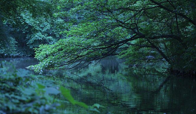 藤原美智子の「色」ものがたり第1回 6月 朝明けの青