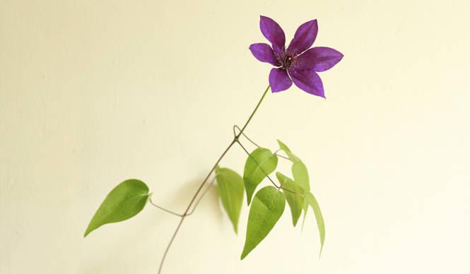 """藤原美智子の「色」ものがたり第12回 """"高貴な紫""""を目指して"""