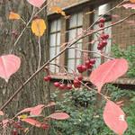 塚田有一│みどりの触知学 第3回:紅花 艶紅 うつし紅 そして笹紅(ささべに)