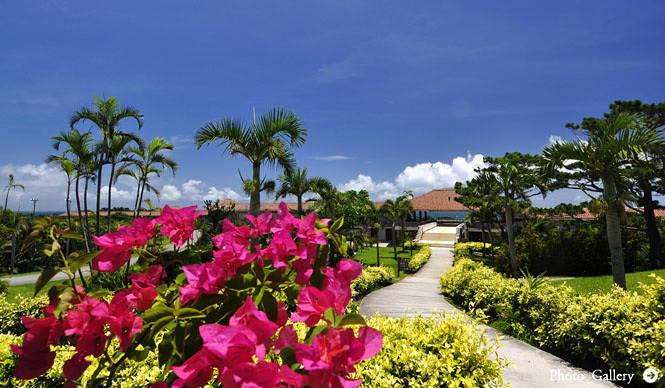 organic elements|沖縄『はいむるぶし』にスパ・トリートメントメニュー誕生