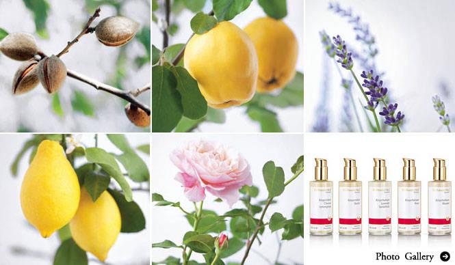 Dr.Hauschka|香りと使用感にこだわった好みで選べるボディミルク