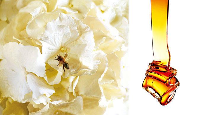 HACCI|濃密なツヤと香りのシャンプー&コンディショナー