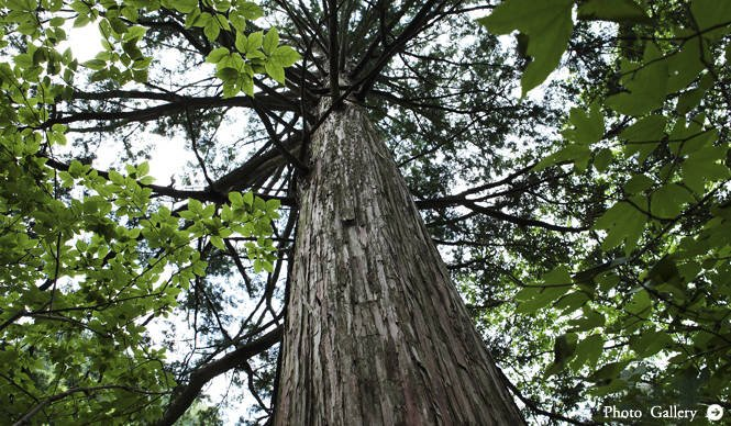 特集|森の神に会う旅~岐阜・東濃地域の「宿」「自然」「文化」~Chapter 1