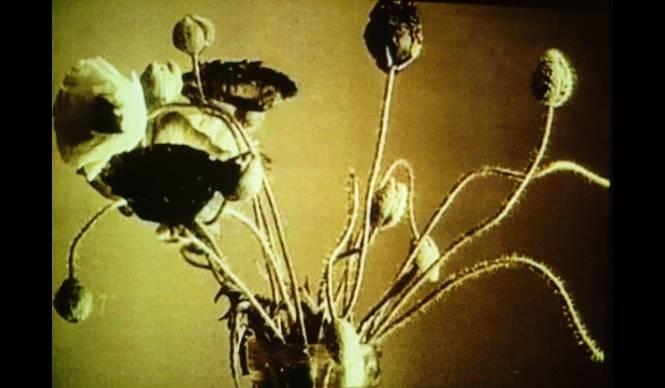 ART|金沢21世紀美術館で映像作家フィオナ・タンの作品を展示