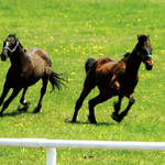 MOVIE|1頭の馬を追うドキュメンタリー『祭の馬』