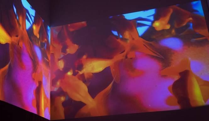 ART|原美術館で『蜷川実花:Self-image』展