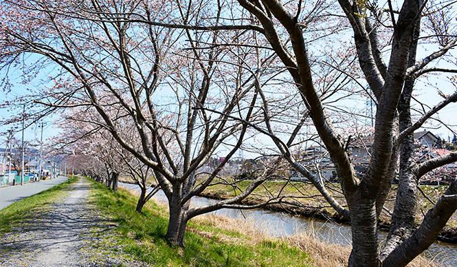 連載|気仙沼便り|3月「桜を待ち、次の再会を心に別れを告げる」