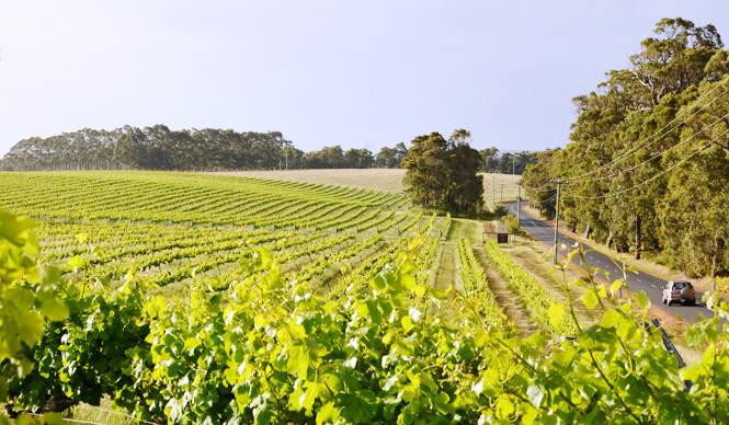 美食大陸オーストラリア、美食とワインをめぐる旅へ|西オーストラリア州 マーガレット・リバー|特集