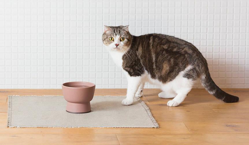 大谷焼の猫用水飲み器「Cat Water Bowl」をリリース|RINN