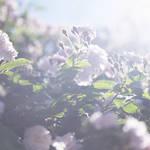 愛する父の死に向き合う日々を撮影した「蜷川実花 うつくしい日々」|ART