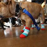 犬の靴・靴下専門店が開発した犬用靴下「Skitter」|docdog
