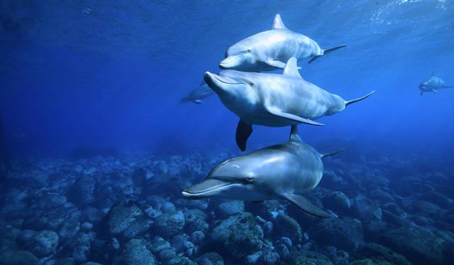 水中写真家が見た未知なる海の美しさ|BOOK