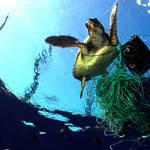 美しく豊かな海を維持するため、NGO団体とパートナーシップを締結|BREITLING