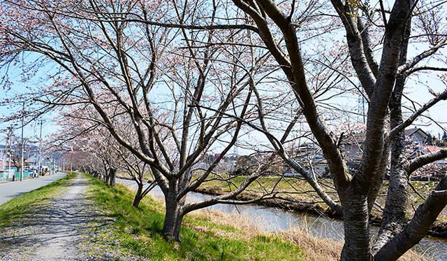 連載|気仙沼便り|3月「桜を待ち、次の再会を心に別れを告げる」 ギャラリー