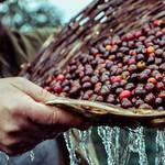 2019年春の数量限定。はつらつとした個性あふれる春限定のネスプレッソ|Nespresso ギャラリー