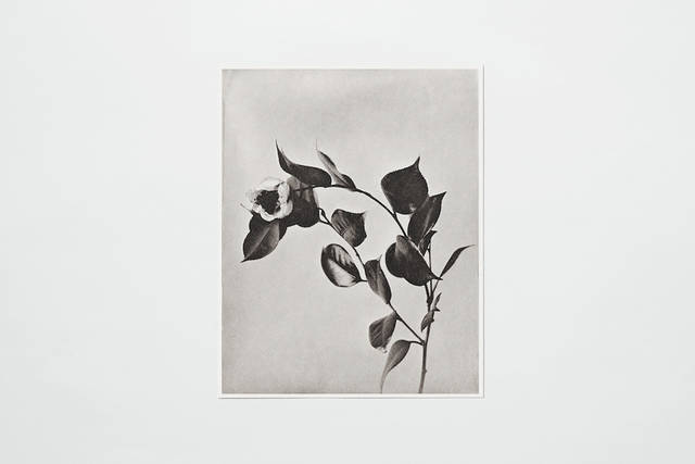 世界最古の写真製版技術で作られた「COLLOTYPE PHOTOGRAPH SERIES」|PAPIER LABO.