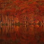 朝イチバンの澄みわたる空気の中で堪能する青森・奥入瀬の絶景紅葉|TRAVEL