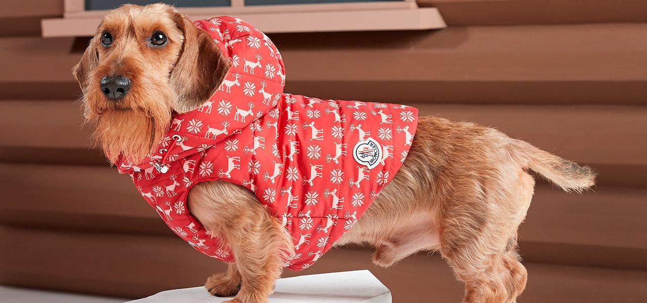 犬たちのプレミアムダウン。「モンクレール ポルド ドッグ クチュール」 MONCLER