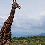 連載|南アフリカ旅行記