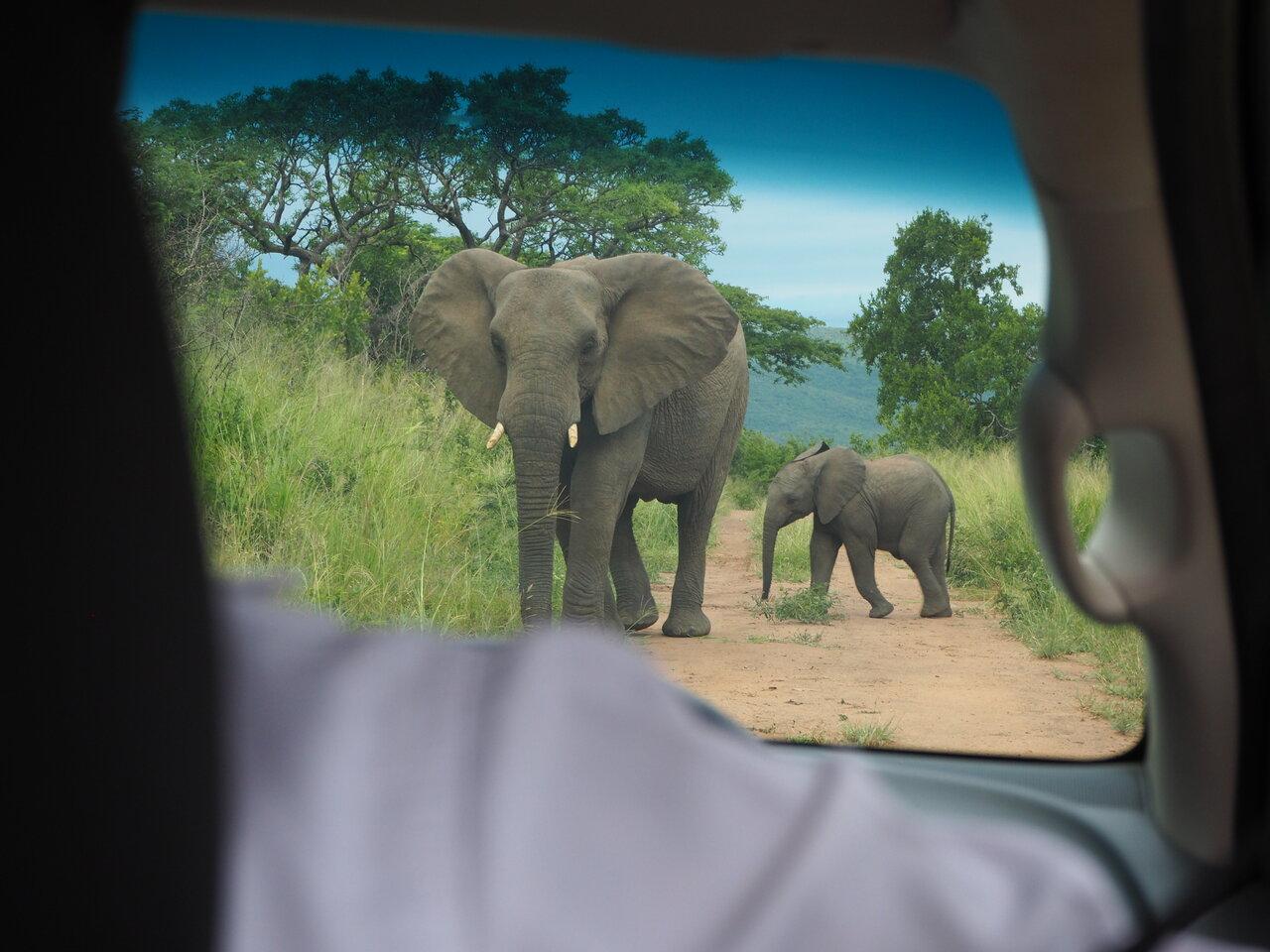 連載 南アフリカ旅行記