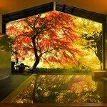 GOTOトラベルで満喫! 星野リゾート 界ブランドのニッポン全国紅葉温泉|TRAVEL