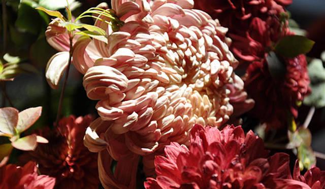 塚田有一│みどりの触知学 「ココア」という名の園芸品種の菊など