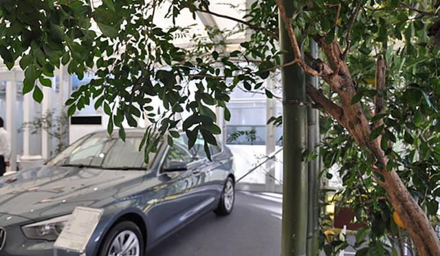 塚田有一│みどりの触知学 BMW Studio ONE シマトネリコ、カリアンドラ
