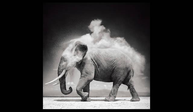 <strong>JEANRICHARD|ジャンリシャール</strong> 動物写真家 ニック・ブラントの作品。&#169; NICK BRANDT