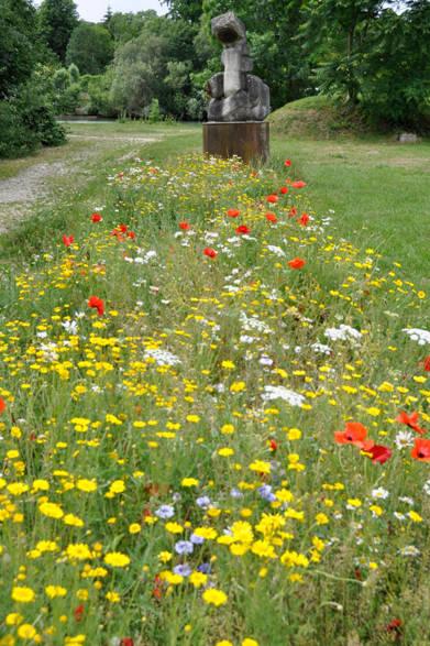 <strong>carnet de jardin 松永 学</strong> 春の野草が埋め尽くす、奥にはマルヌ川が。。。