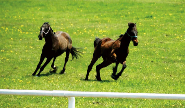 © 2013記録映画『祭の馬』製作委員会