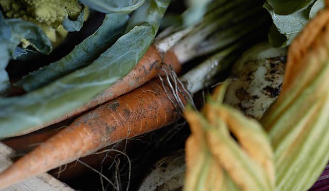 色も味も濃い「須永農園」のニンジン