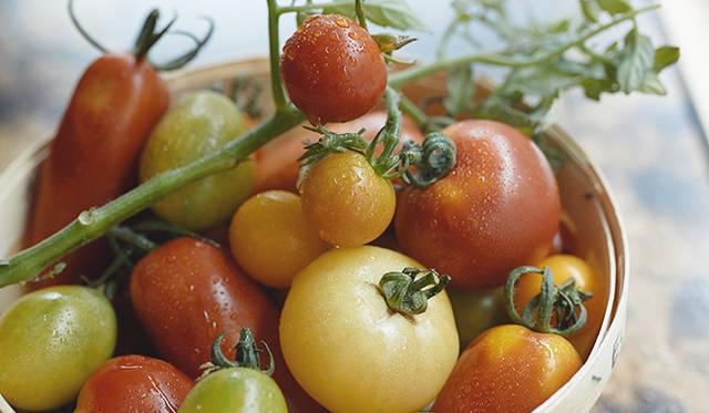 形も色もさまざまなトマト