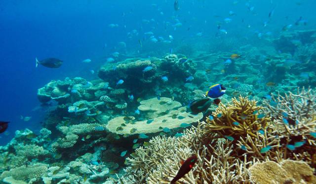 砂浜から50メートルほど先へ進むと、海の色がラムネ色から濃い青色に変わり、魚の種類と数が一気に増える