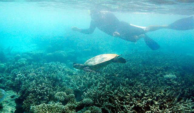 ゴーシムさんの先導で沖合に移動。そこで彼が指差す方向をたどってみると、なんとそこにいたのは亀。しかも超巨大な海亀だ
