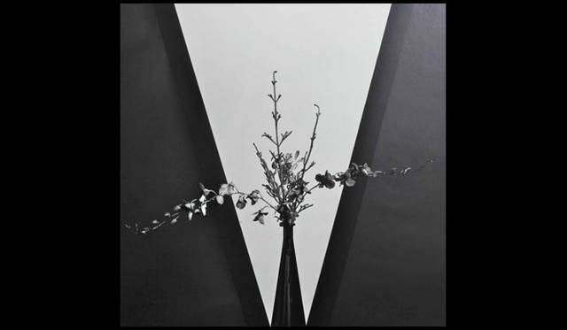 <strong>AXIS GALLERY|アクシスギャラリー</strong><br />「AXIS PHOTO MARCHE 2(AXIS フォトマルシェ 2)」 Robert Mapplethorpe「Flowers」, 1980