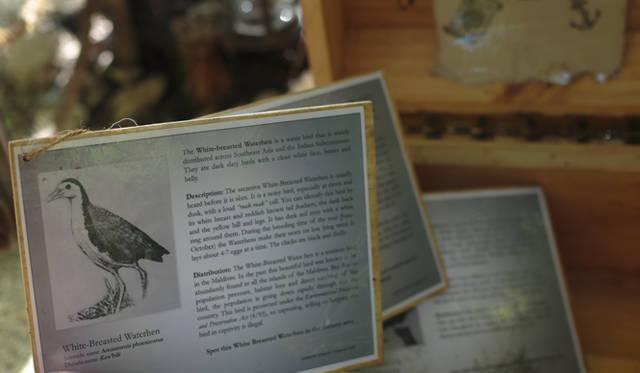 宝箱のなかから出てきたのは動物の絵が描かれたプラカード。モルディブだけに生息するという珍しい木や鳥について解説したものだという