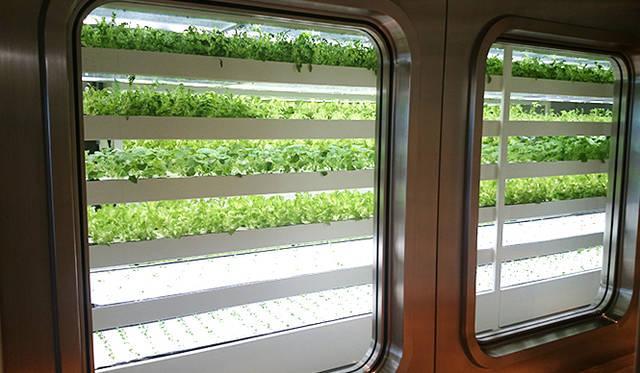 銀座・伊東屋 新本店ビル11F:水耕栽培で、レタスのほか4種類の野菜を育てている「FARM」をテーマにしたフロア。来店者も見学することができる。栽培されている野菜は、12Fのカフェ「Stylo(スティロ)」で提供される