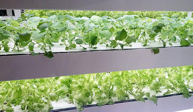 銀座・伊東屋 新本店ビル11F:水耕栽培で、フリルレタスやルッコラなど4種類の野菜を育てている「FARM」をテーマにしたフロア。来店者も見学することができる。見学スペースの窓枠は、旧本店の窓枠を利用している