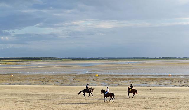 何キロもある湿地帯を巡るには馬のツアーもかなり魅力的