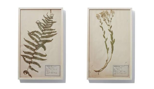 「SLOW HOUSE(スローハウス)二子玉川」 「Pressed Flower Flame」 フランス・クリニャンクールの蚤の市で売られていた押し花をヒノキで一点ずつフレーミングしたアート。壁面にボタニカルな彩りをくわえたい。各1万6200円~