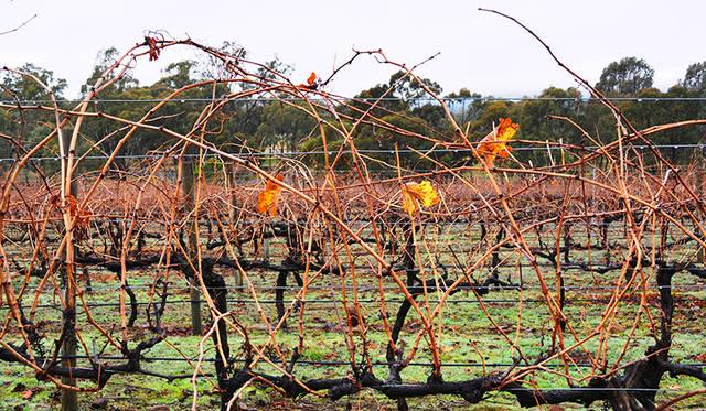 訪れた6月は南半球の冬。ビクトリア州は冷涼で気候が変わりやすいが、ワインづくりには適している