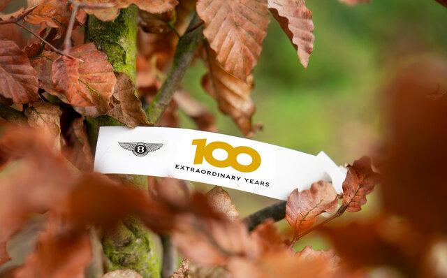 ベントレーが100本の苗木を植樹