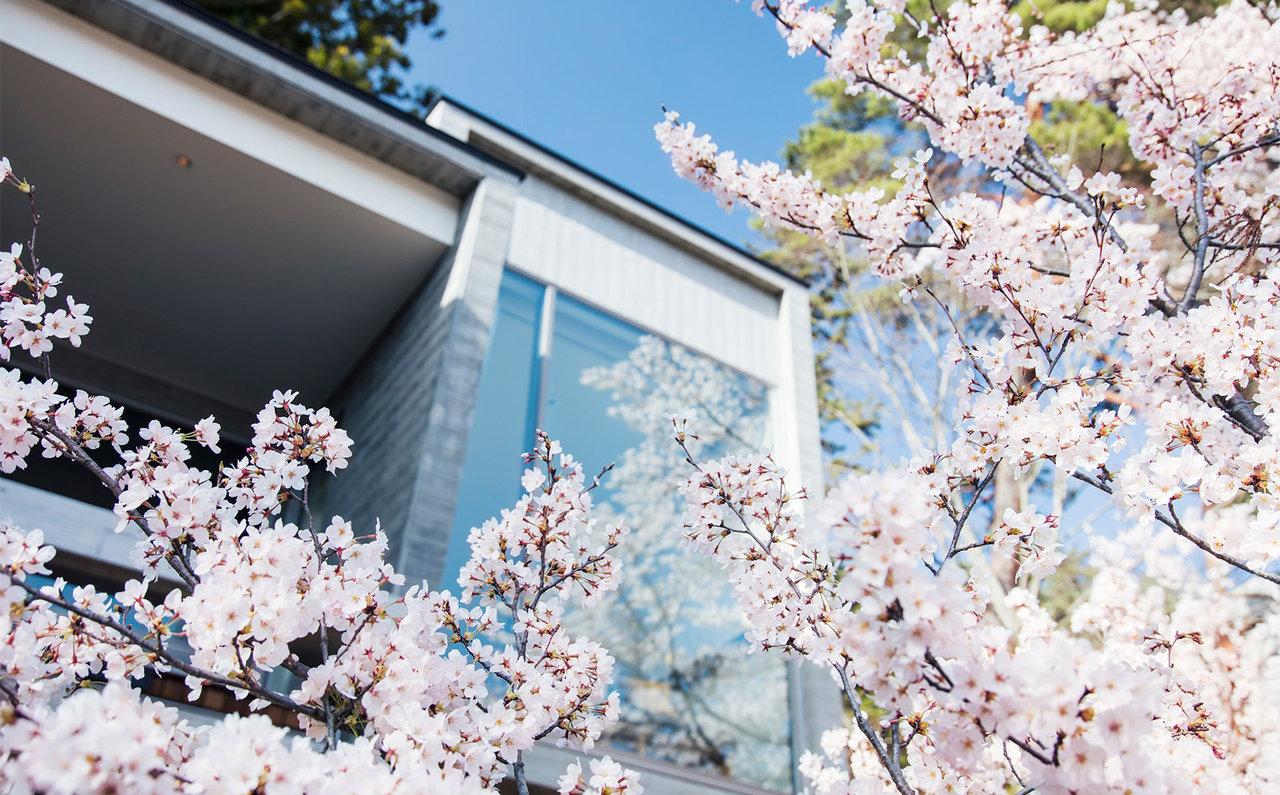 星のや富士 桜とキャビン外観