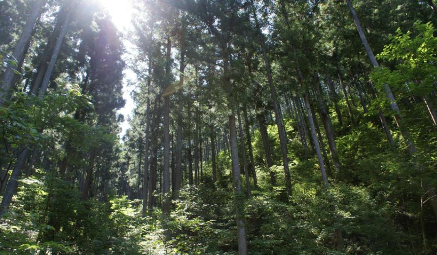 more trees|隈研吾デザイン「つみき」